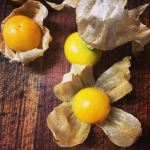 ground cherry salsa cherry